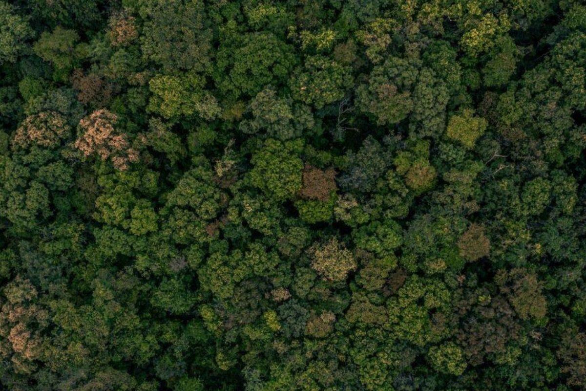terraplanagem ecológica na permacultura