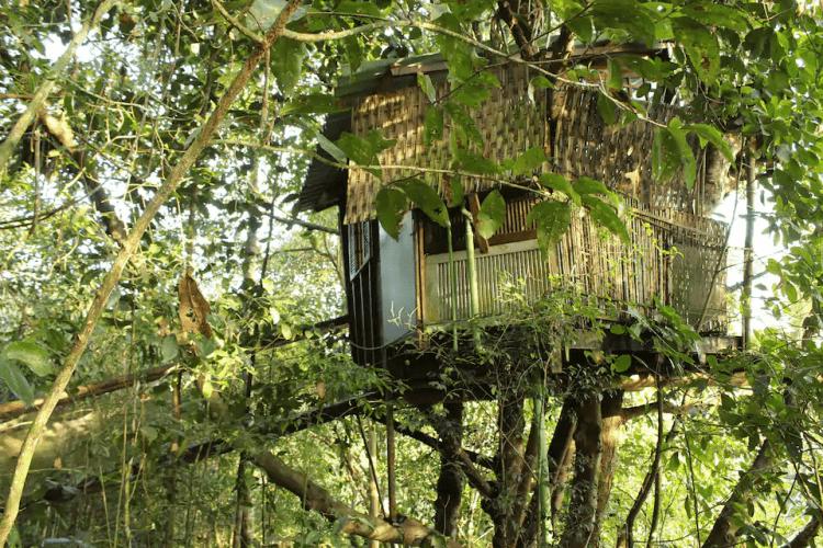casa na árvore ecológica