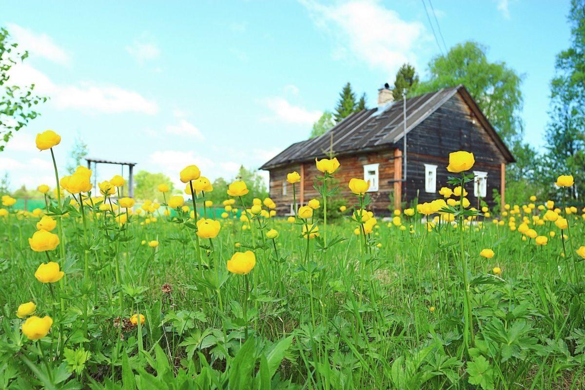 casa de campo antiga em meio às flores