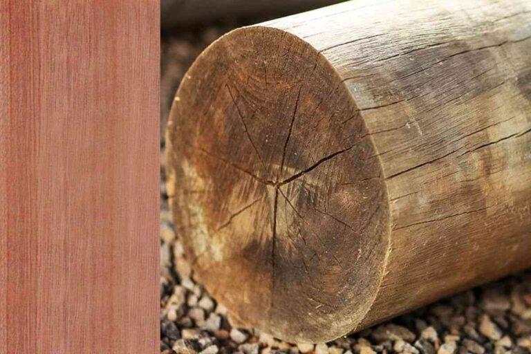 Eucalipto: conheça todas as características deste tipo de madeira