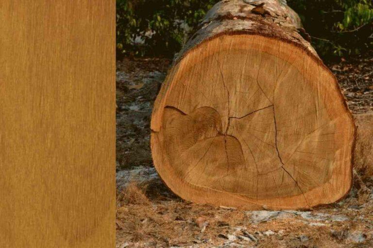 Itaúba: conheça todas as características deste tipo de madeira
