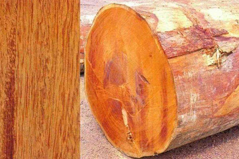 Angelim: conheça todas as características deste tipo de madeira