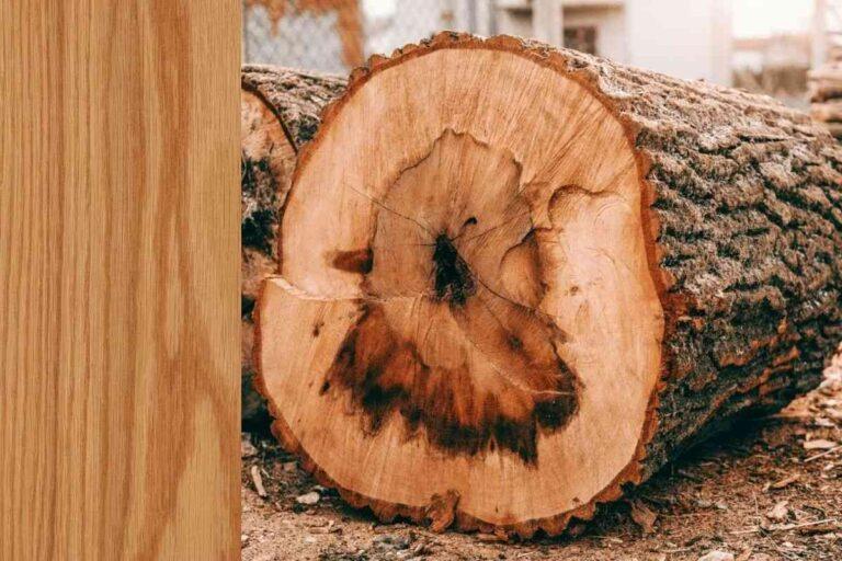 Carvalho: conheça todas as características deste tipo de madeira