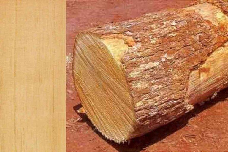 Caxeta: conheça todas as características deste tipo de madeira