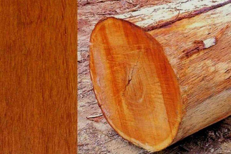 Cedrinho: conheça todas as características deste tipo de madeira