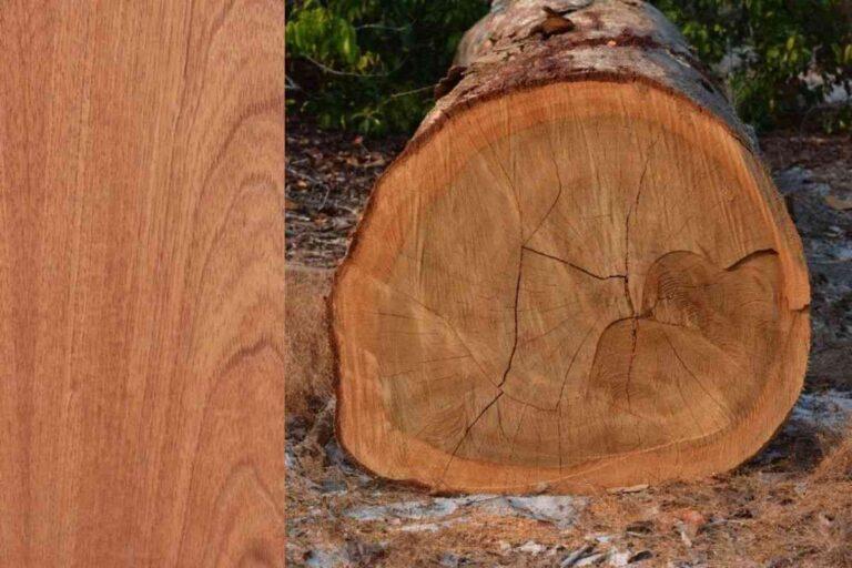 Cedro Rosa: conheça todas as características deste tipo de madeira