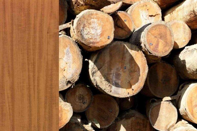 Garapeira: conheça todas as características deste tipo de madeira