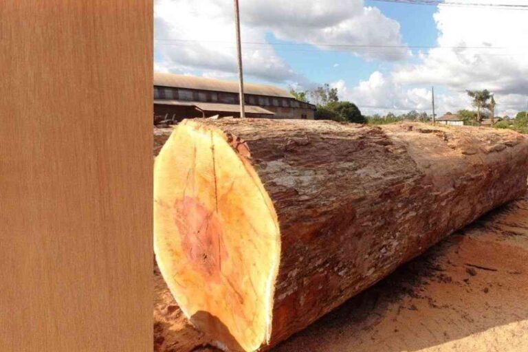 Guajará: conheça todas as características deste tipo de madeira
