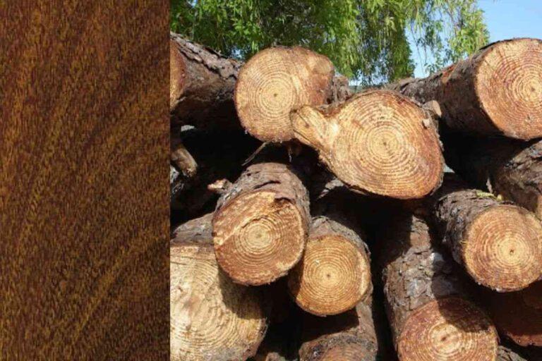 Ipê: conheça todas as características deste tipo de madeira