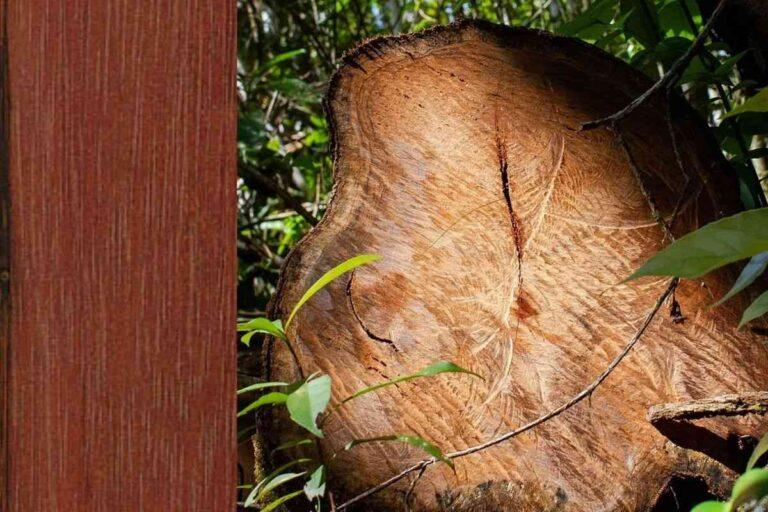 Jacarandá: conheça todas as características deste tipo de madeira