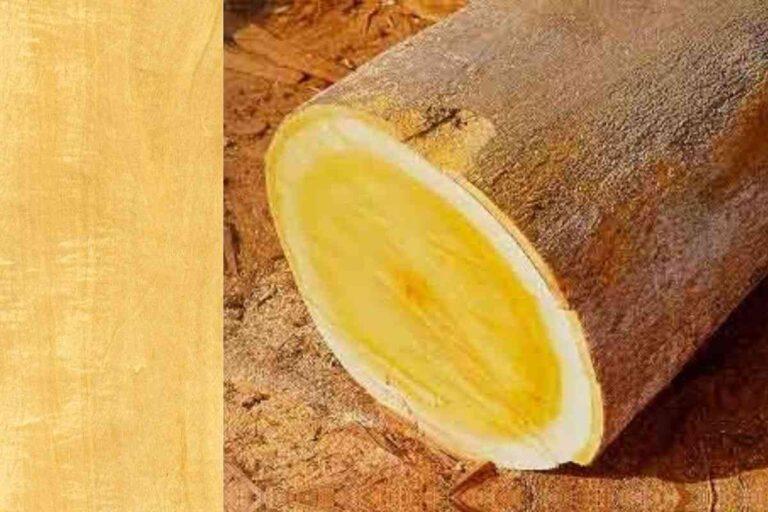 Pau-marfim: conheça todas as características deste tipo de madeira