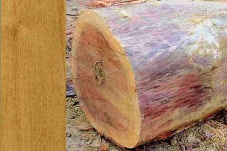 Perobinha: conheça todas as características deste tipo de madeira