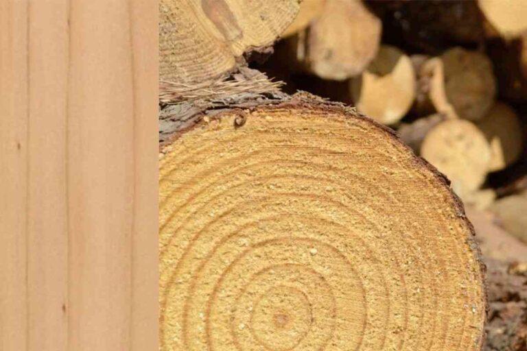 Pinho: conheça todas as características deste tipo de madeira