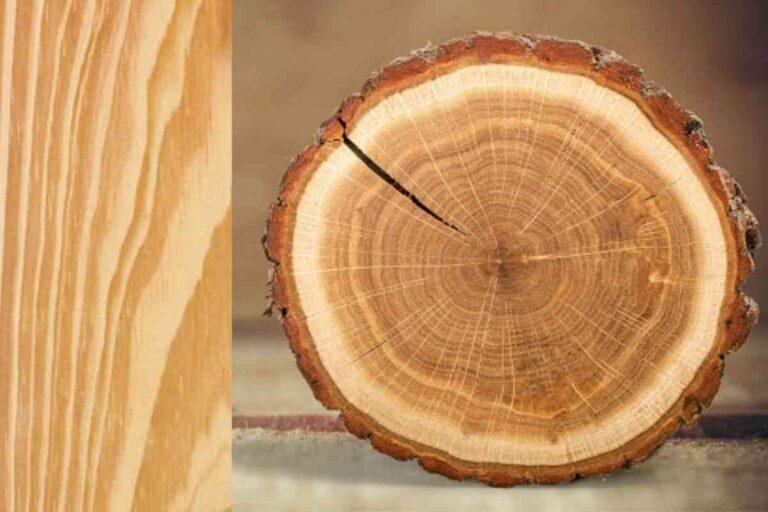 Pinus: conheça todas as características deste tipo de madeira