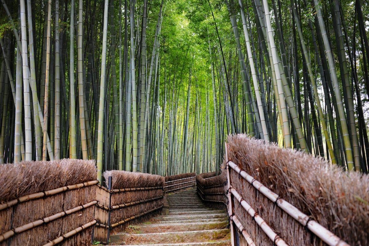 jardim de bambu