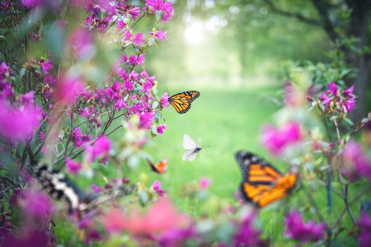 jardim de borboletas