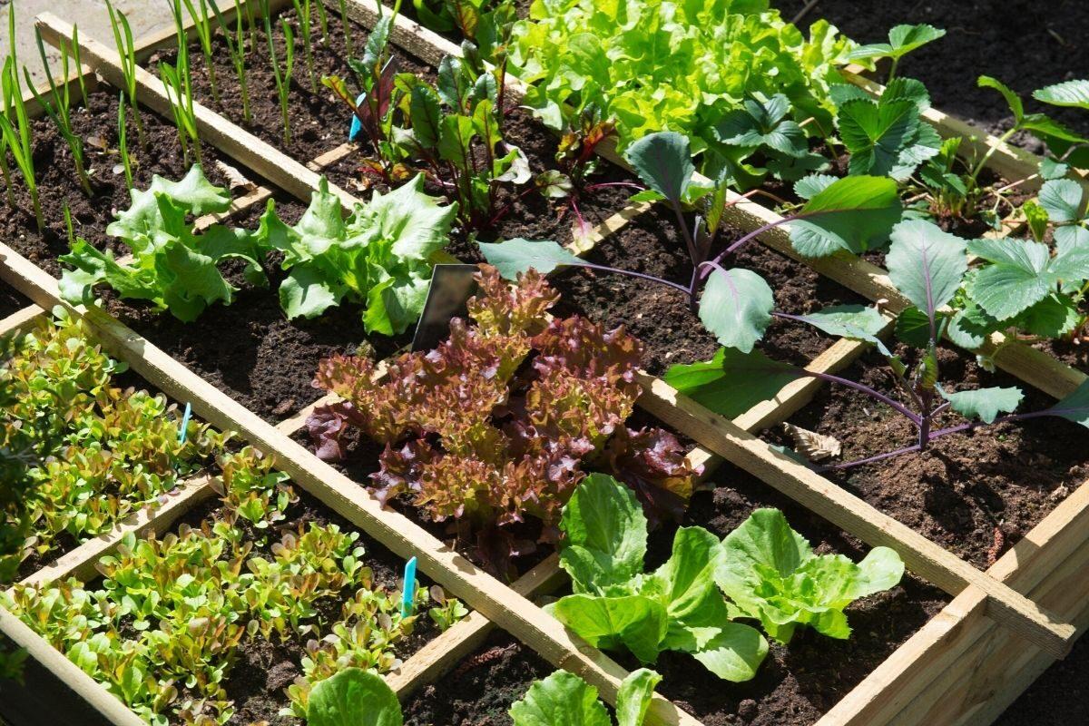 jardim de frutas e vegetais