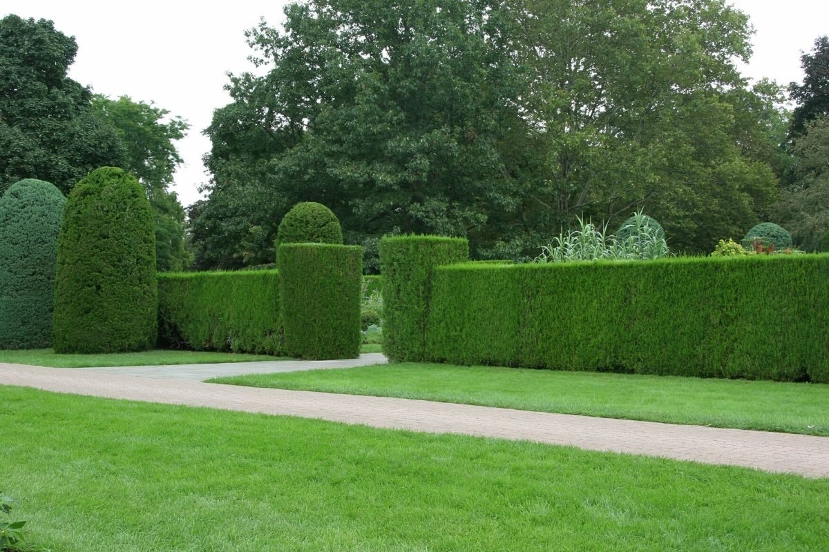 jardim de sebes