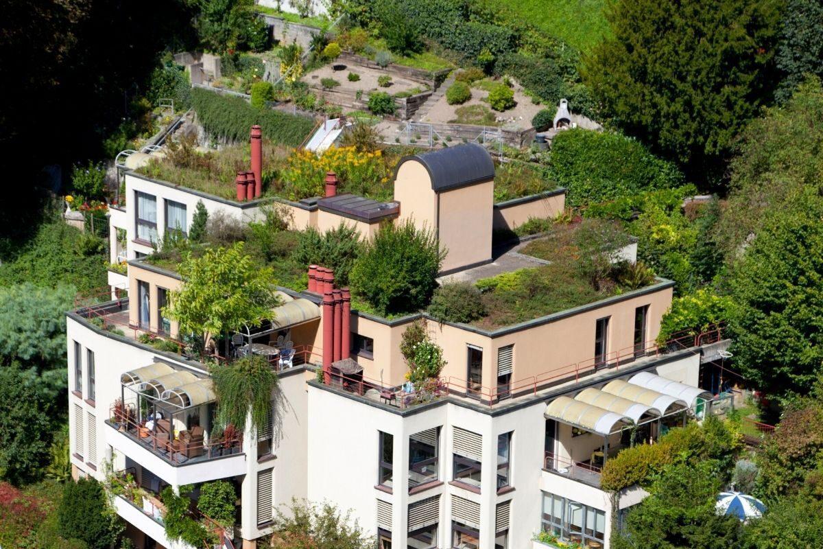 jardim telhado verde