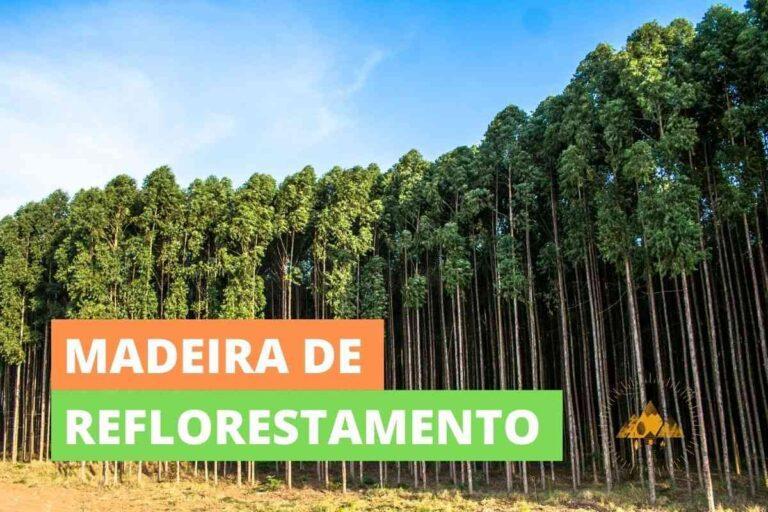O que é a madeira de reflorestamento e o que faz dela mais sustentável?