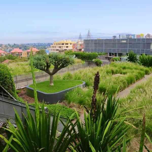 sétima camada do telhado verde plantas vegetação