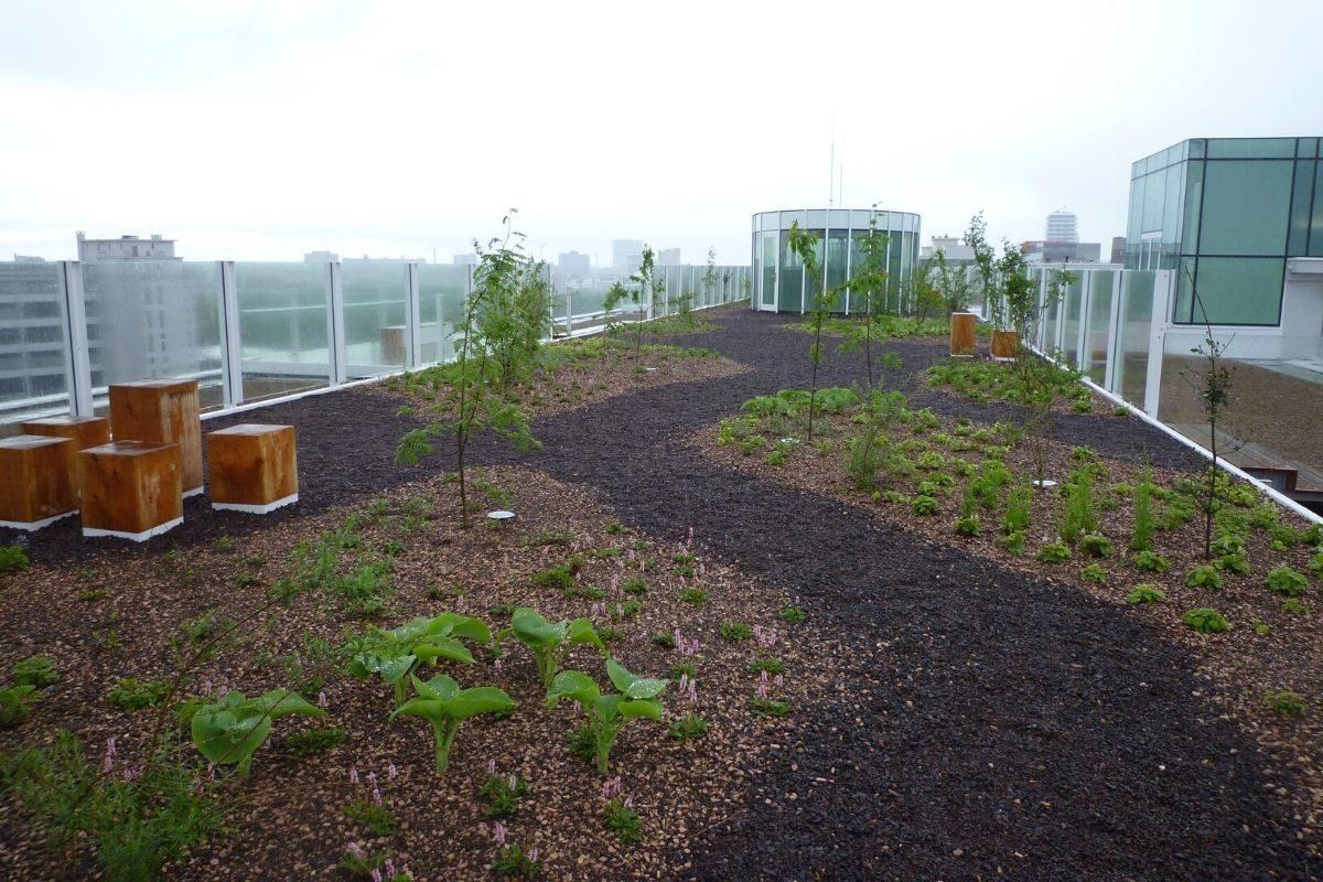 telhado verde simples na holanda