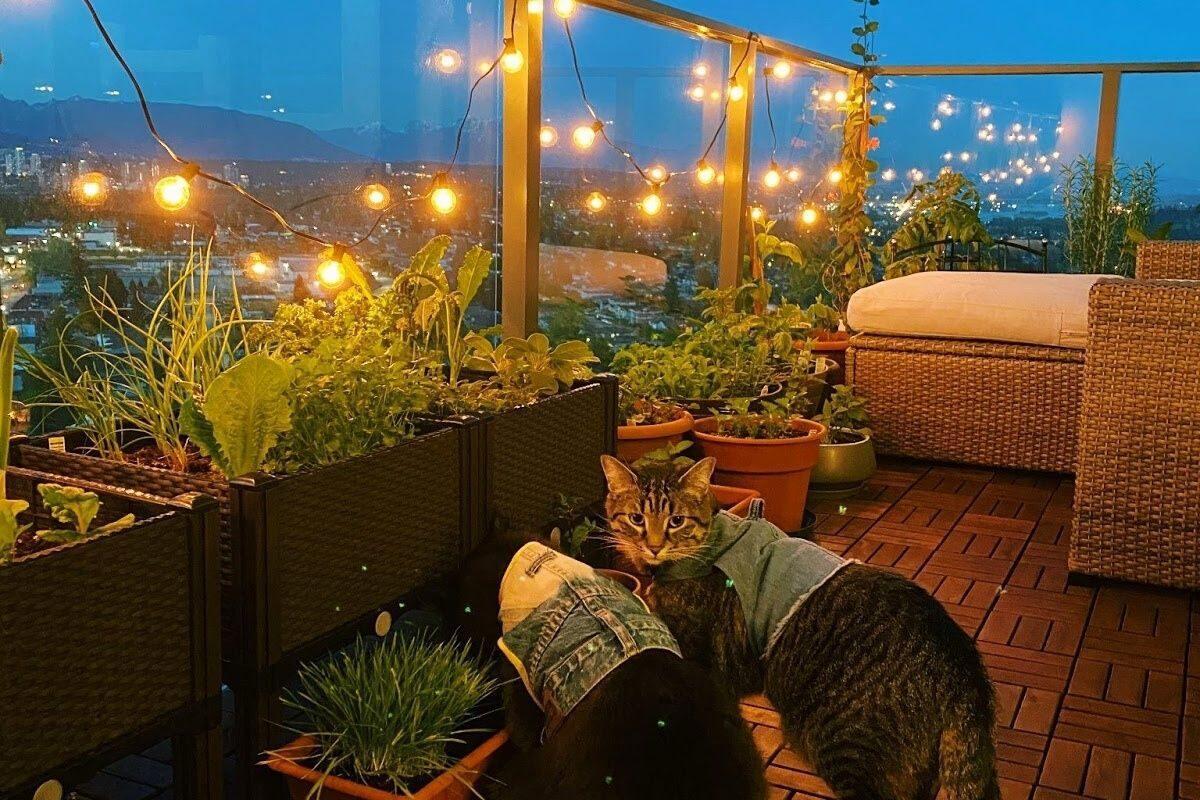 jardim pequeno ideia 10