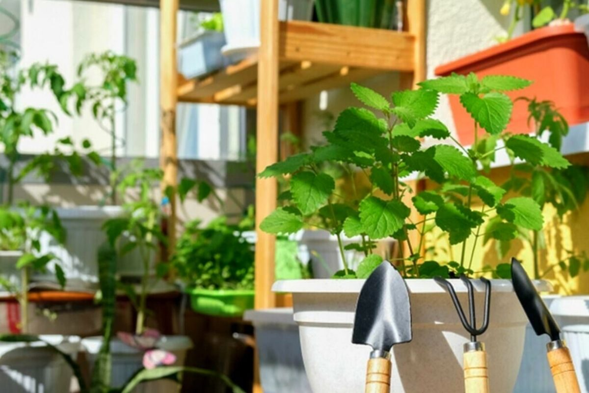 jardim pequeno ideia 38