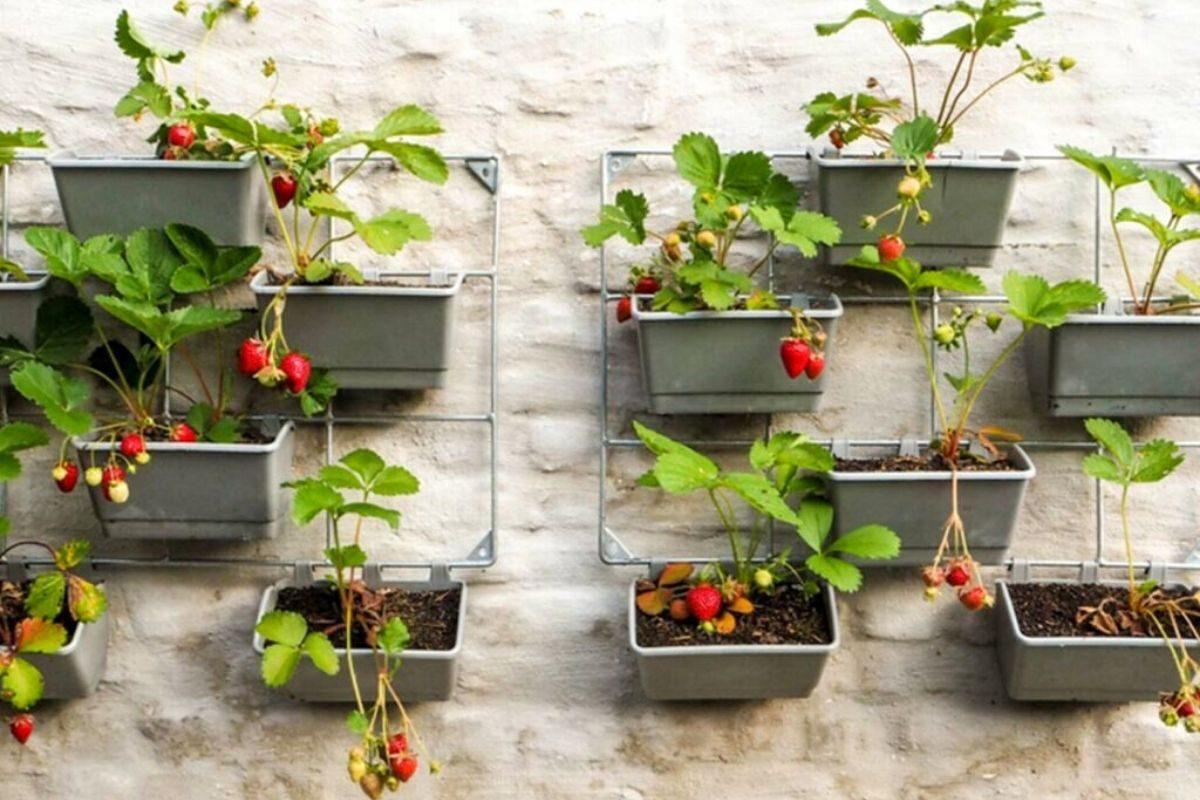 jardim pequeno ideia 5
