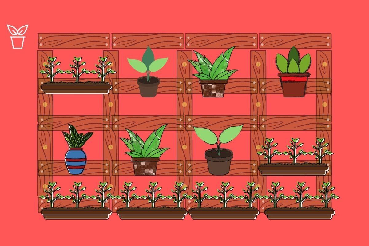 Passo 6_ coloque as plantas