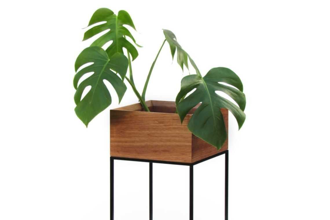 Costela-de-adão para vaso de madeira (2)